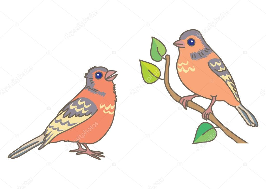 Two singing finch