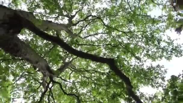 Lombozat Erdő levelek, napsütés, napsugarak, gerenda ágak fa, nyári kilátás