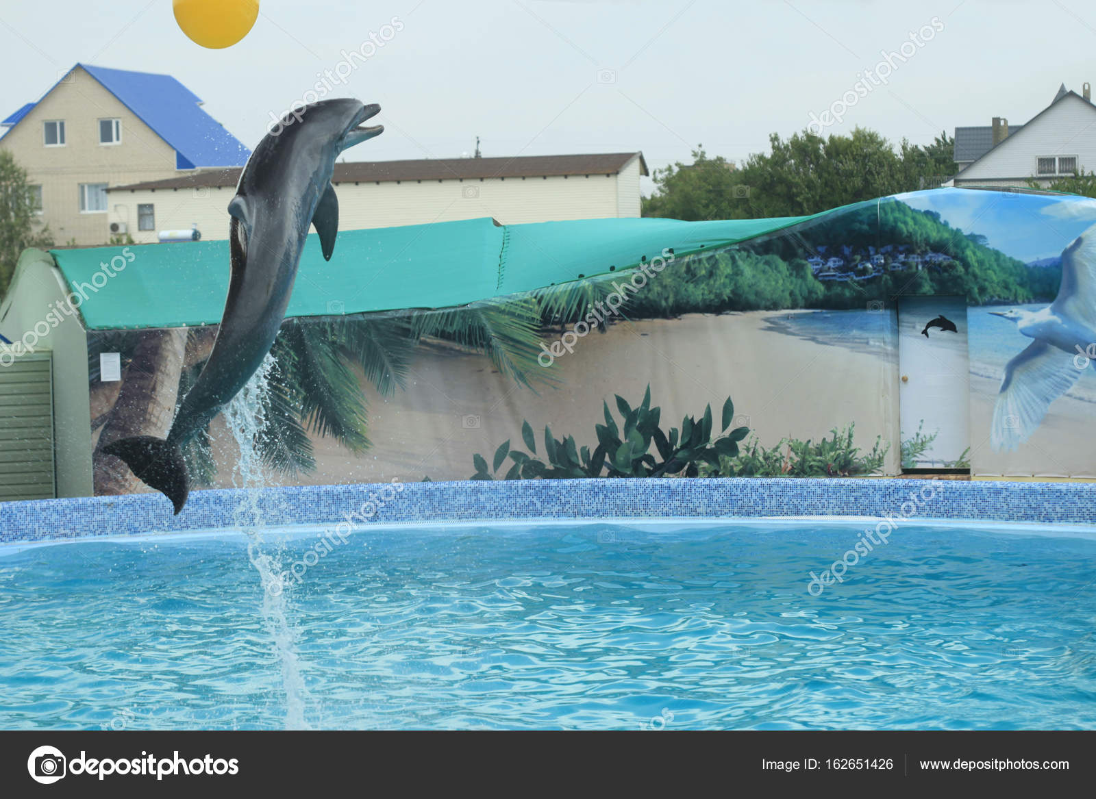 Dolphin show in swimming pool — Stock Photo © olena2552 ...