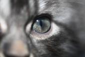 Fotografie eye of fluffy kitten
