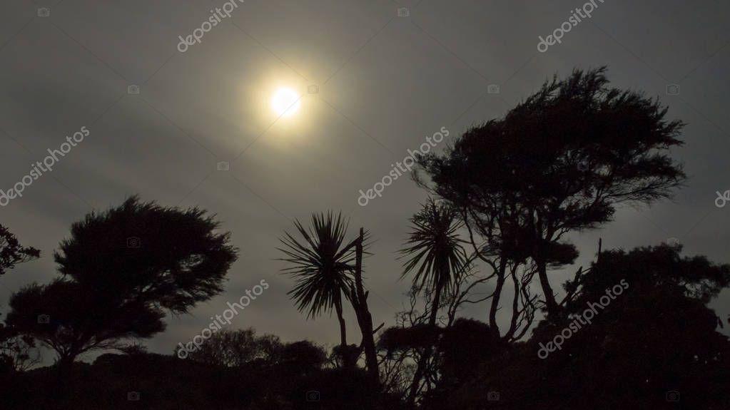 Silhouettes of New Zealand Native bush vegetation