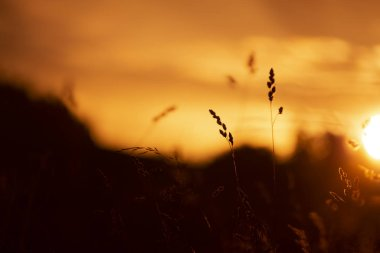 Beautiful golden red sunset with grass background.