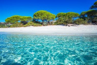 Sandy Palombaggia beach