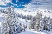 Fotografie Bäumen fallenden Neuschnee im Skigebiet Kitzbühel