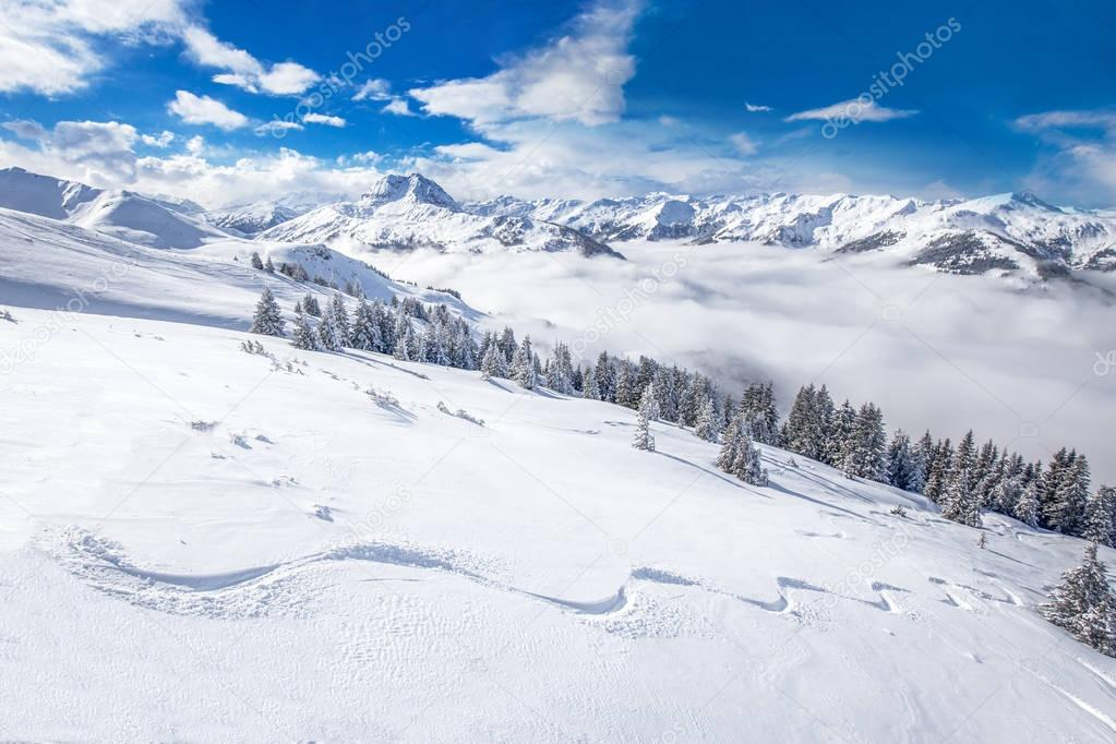 Trees covered by fresh snow in Austria Alps