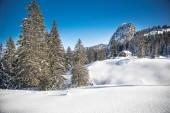 Fotografie Weiße Bäume fallenden Neuschnee in den Alpen, Postkarte Winterlandschaft