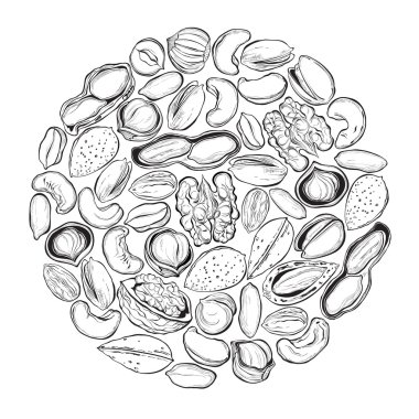 Nuts illustration in the circle.