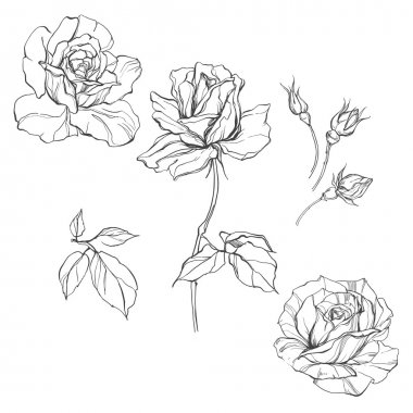 Set of  isolated roses