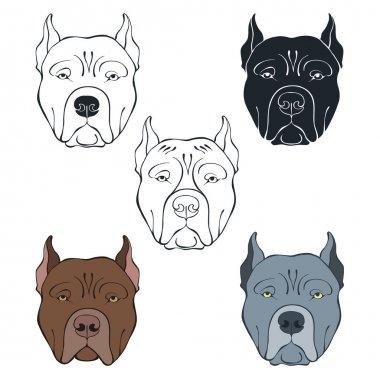 Pit Bull Terrier faces set