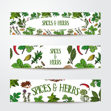 Set of hand drawn banner templates with spices and herbs