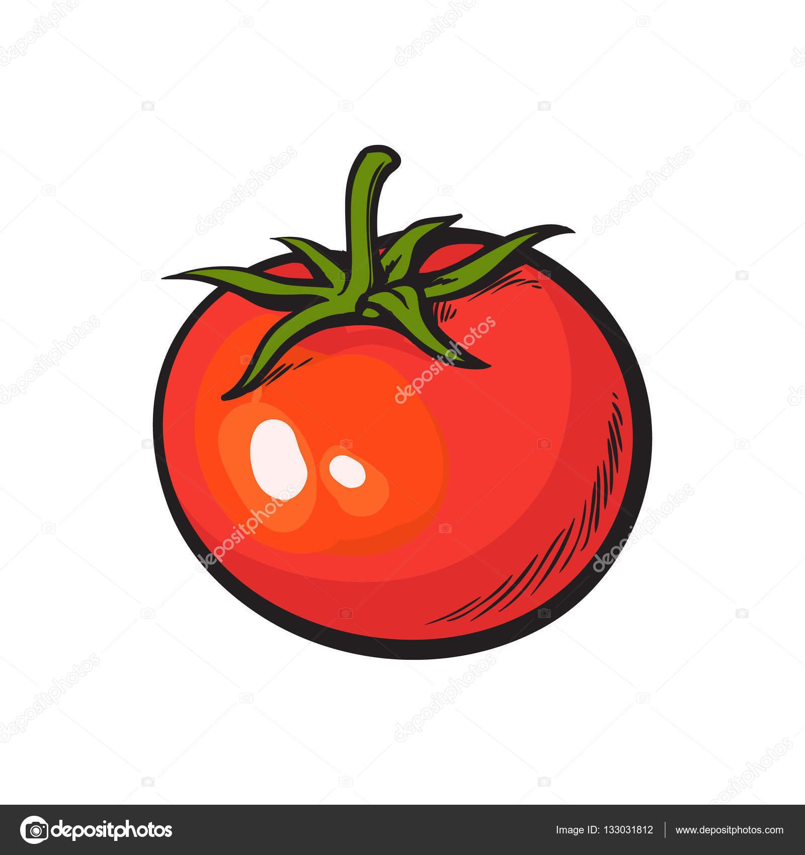 Estilo de dibujo dibujo de brillante tomate rojo maduro archivo im genes vectoriales - Dessin de tomate ...