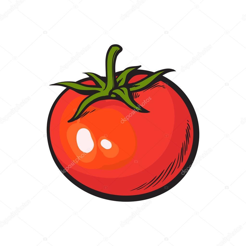 Styl szkic rysunek b yszcz cy dojrza y pomidor czerwony grafika wektorowa sabelskaya 133031812 - Tomate dessin ...