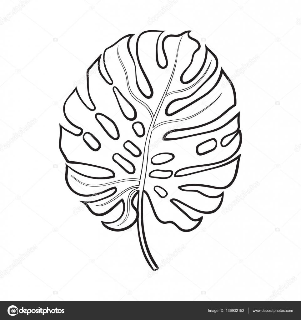 volledige blad monstera palmboom schets