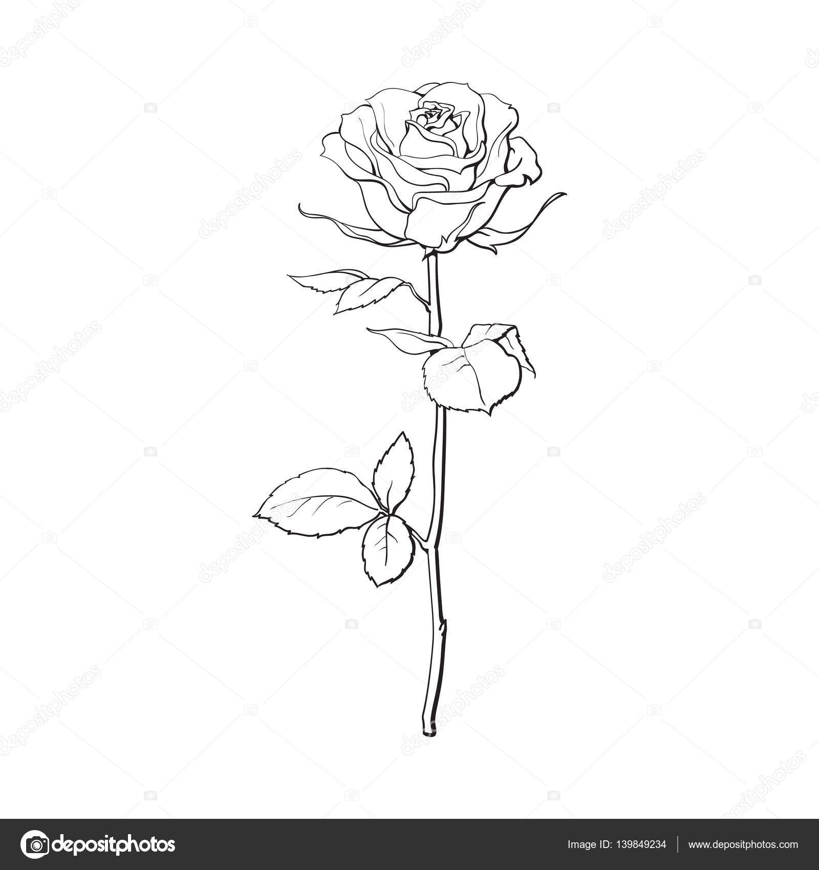 Profonde Contour Rose Avec Feuilles Vertes Illustration Vectorielle