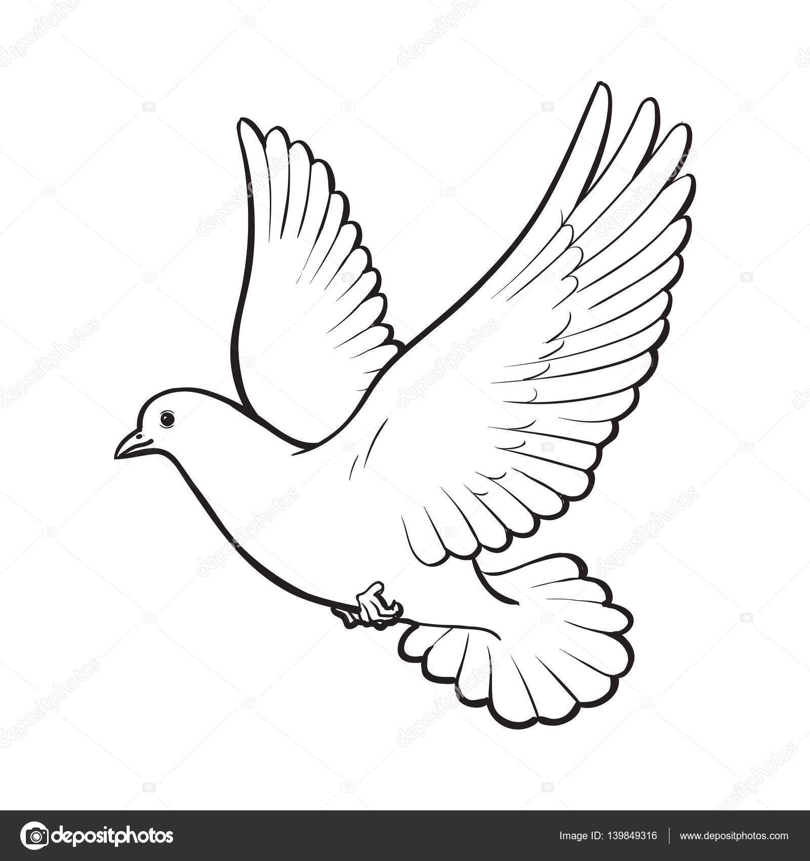 Free Flying White Dove Isolated Sketch Style Illustration Stock