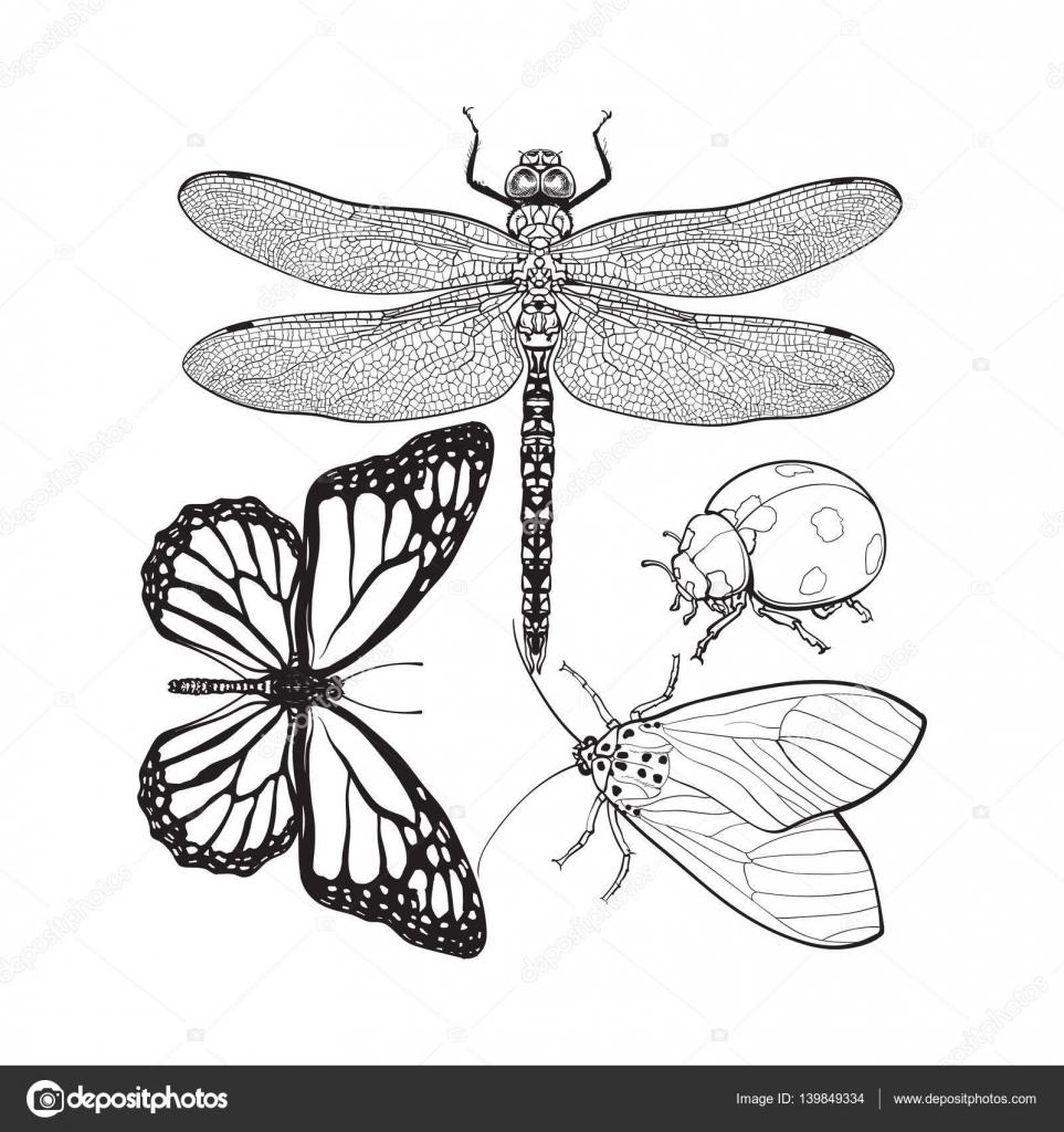 Conjunto de insectos como la libélula, Mariquita, mariposa y polilla ...