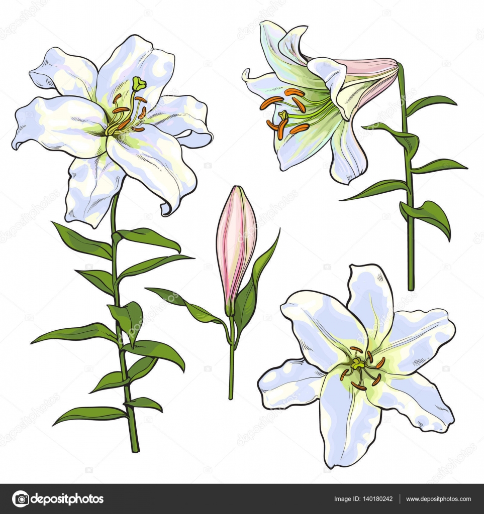 Set of hand drawn white lily flowers side top view stock vector set of hand drawn white lily flowers side top view stock vector izmirmasajfo