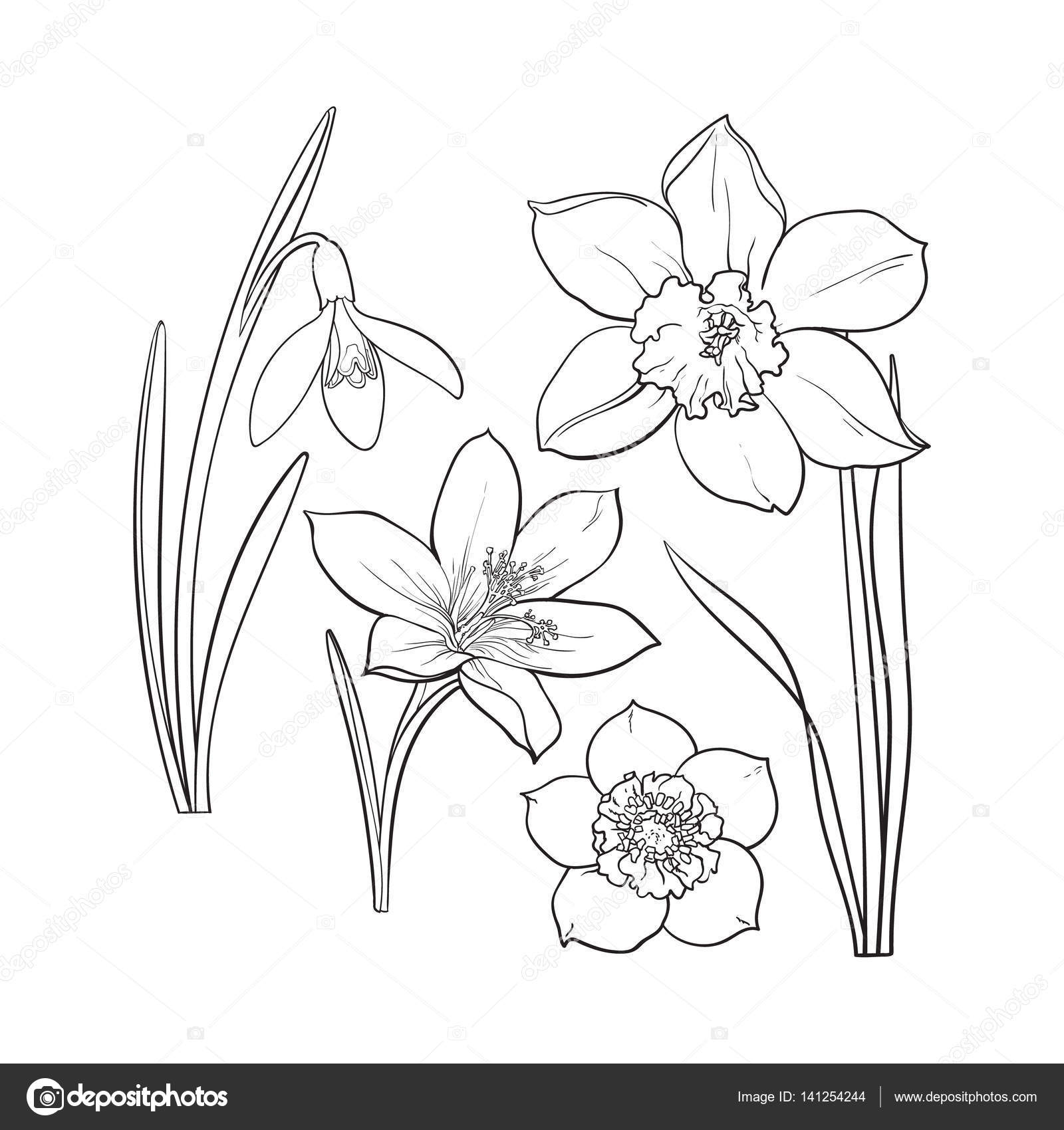 set of summer flowers daffodil snowdrop crocus sketch vector