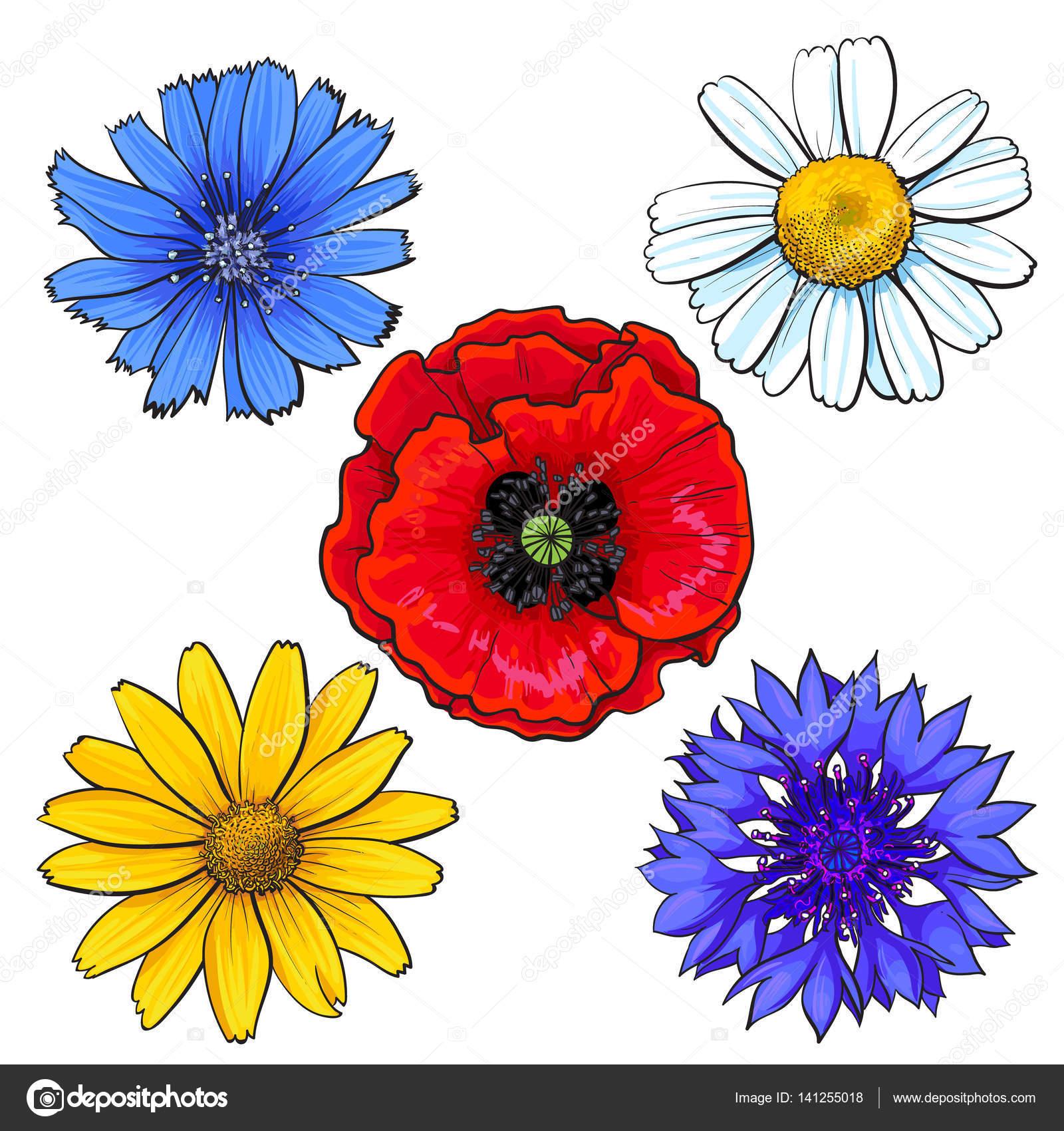 Fleur de coquelicot dessin - Coloriage fleur bleuet ...
