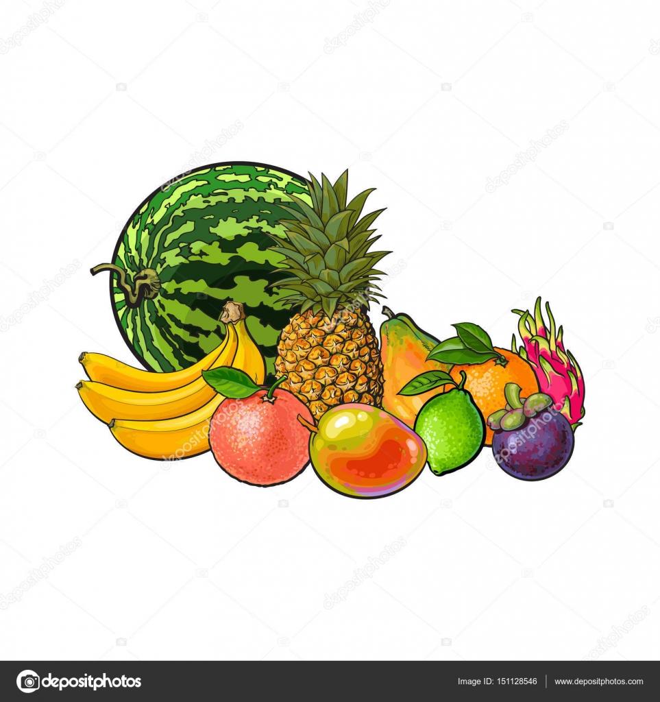 Mano alzada dibujo estilo conjunto de frutas ex ticas y tropicales vector de stock - Frutas tropicales y exoticas ...