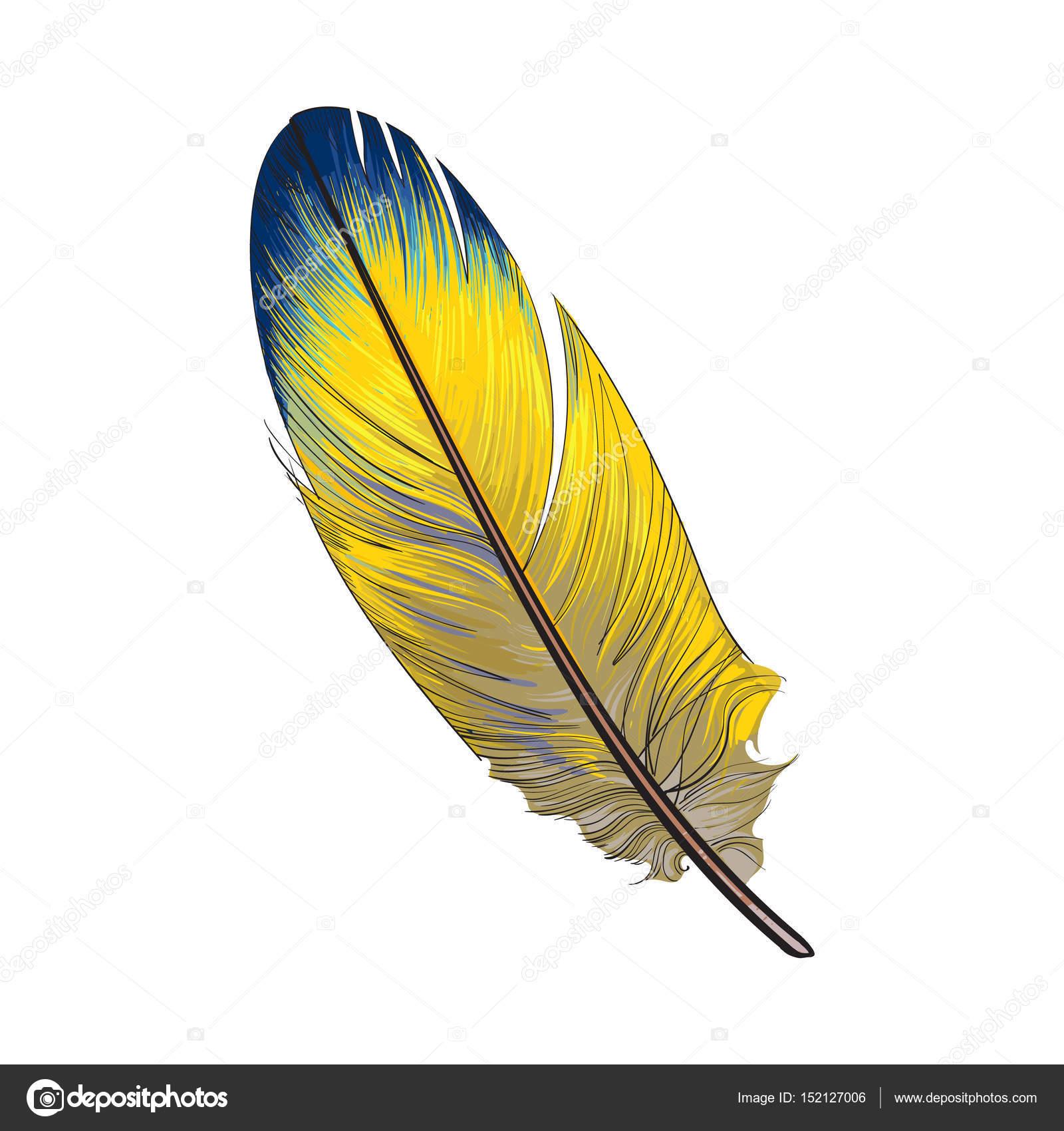 Fotos Plumas Aves Mano Dibujada Smoth Amarillo Y Desenfoque De