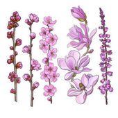 Photo Hand drawn pink flowers - magnolia, apple and cherry blossom, heather