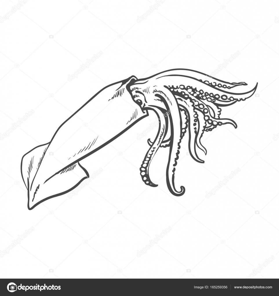 calamar de mar de dibujos animados dibujo aislado del vector ...