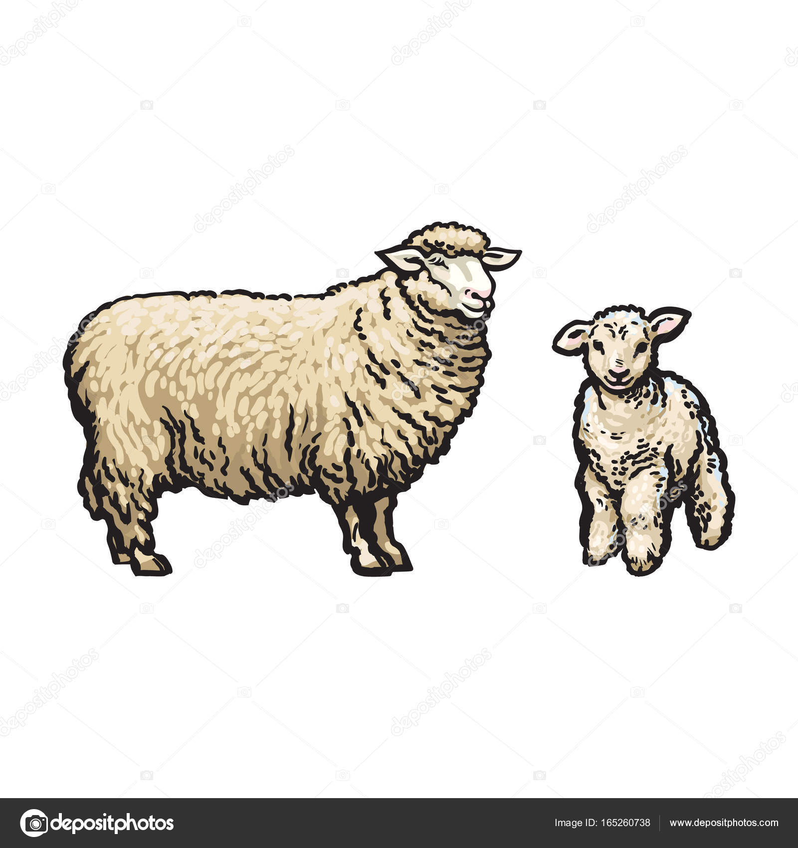 vector sketch cartoon style sheep and lamb set stock vector 165260738