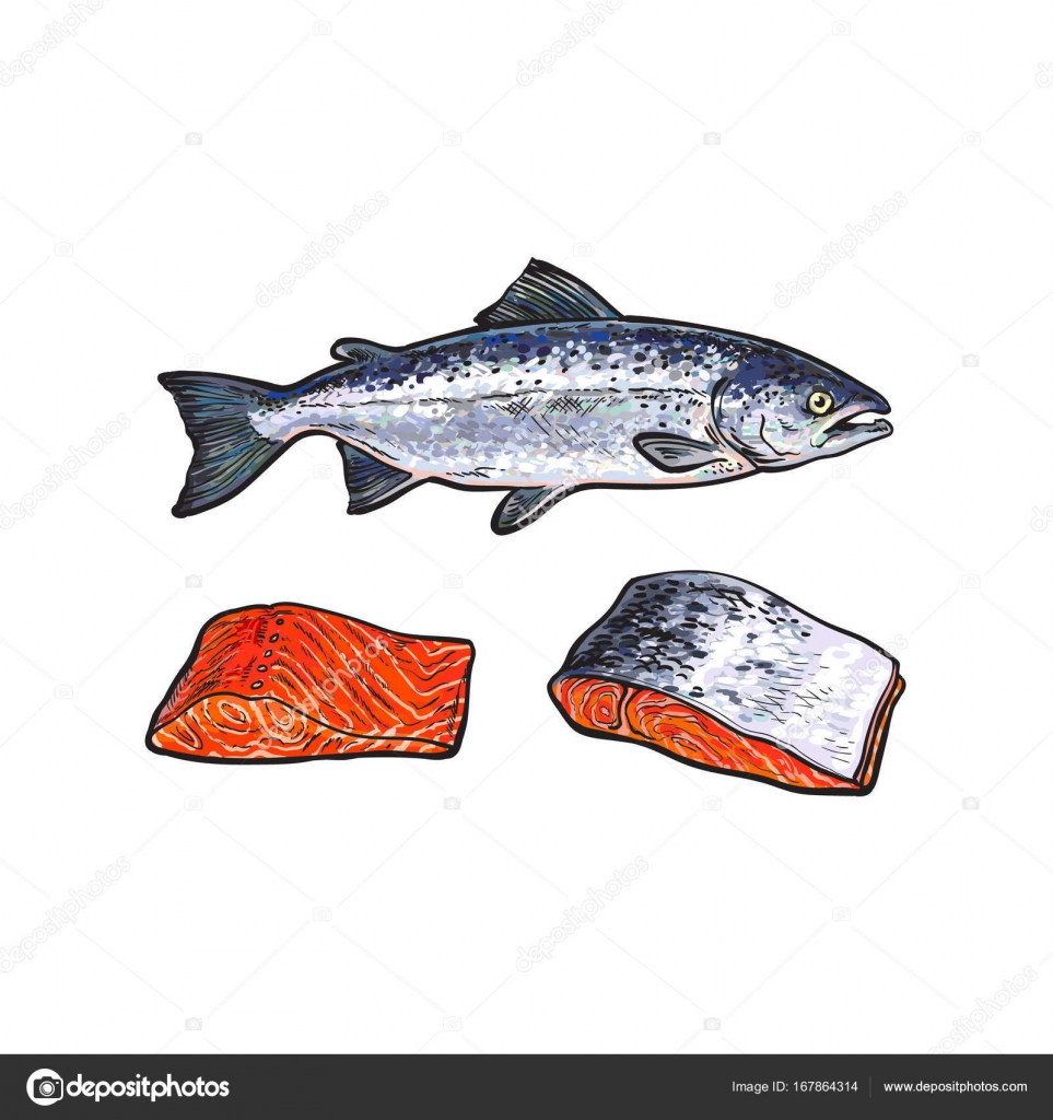 Vector sea red salmon fish meat fillet set stock vector for Salmon fish images