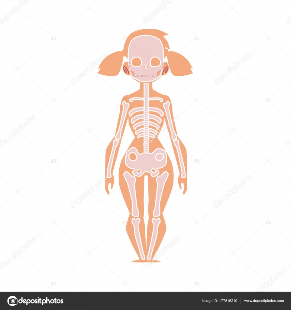 Anatomy Chart Of Human Skeleton Female Body Stock Vector