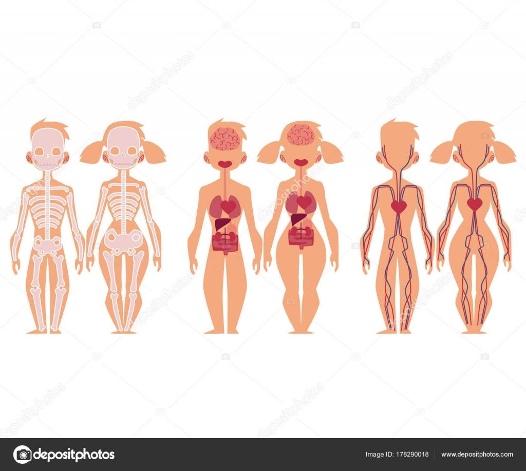 Mujer, hombre y anatomía humana gráfico infografías — Archivo ...