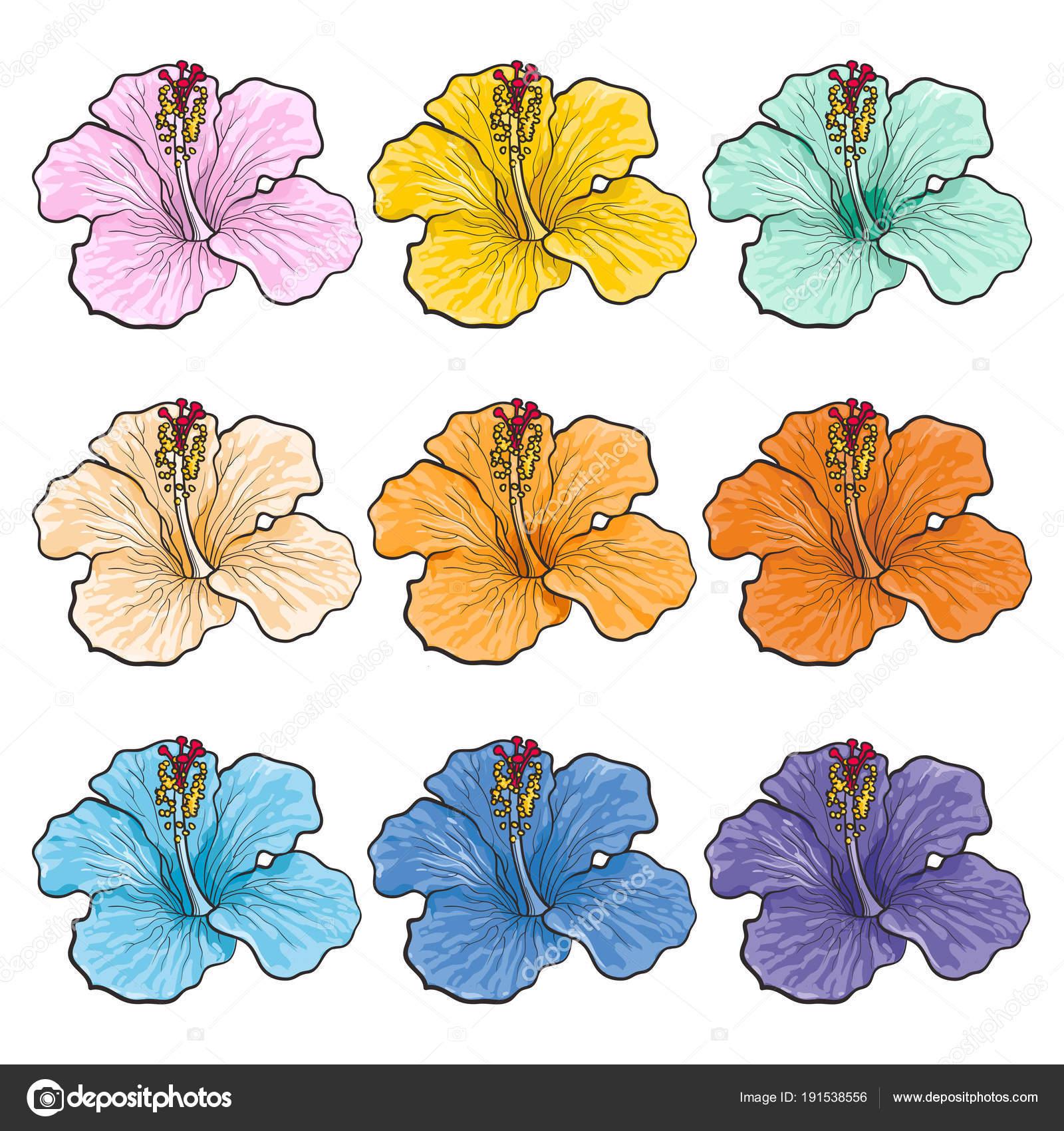 Conjunto Aislado De Flores Tropicales Multicolores Hibiscos En El