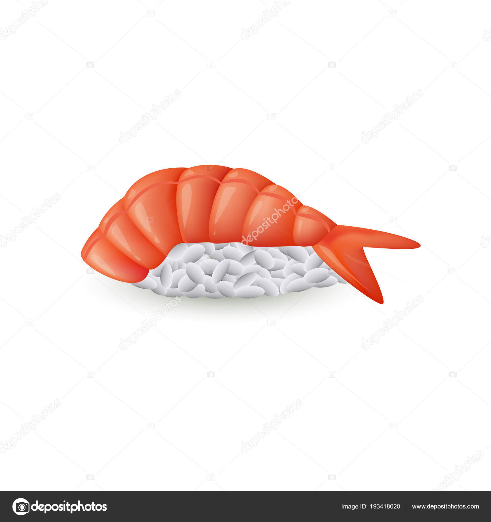 白地 現実的なベクトル イラスト分離された新鮮な海老寿司海老のにぎり