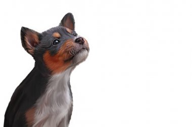 Drawing puppy breed Toy fox terrier