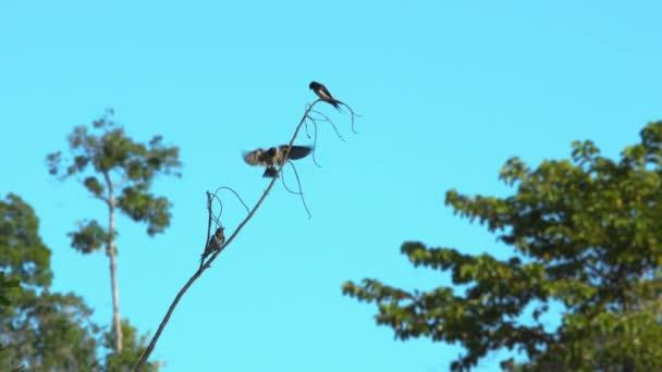 Přírodní pták stojící na větvích stromu