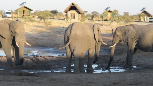 Nata, Botswana - srpen 2016: Afričtí sloni setkání u vody rybníka kolem Turistické chaty.