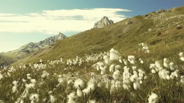 Idylické horské krajiny, kvetoucí zelené louce uprostřed skalnatého pohoří vysoké nadmořské výšce a vrcholy. Letní dobrodružství v italských Alpách. Zpomalený pohyb