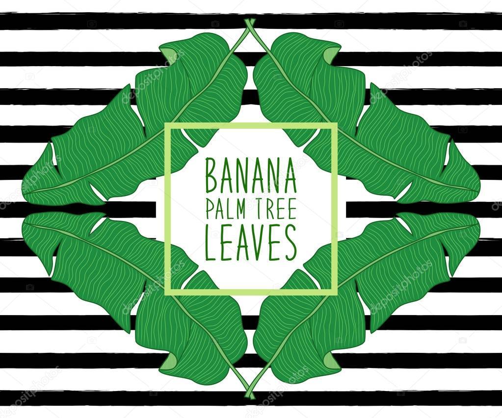 banana frame leaves