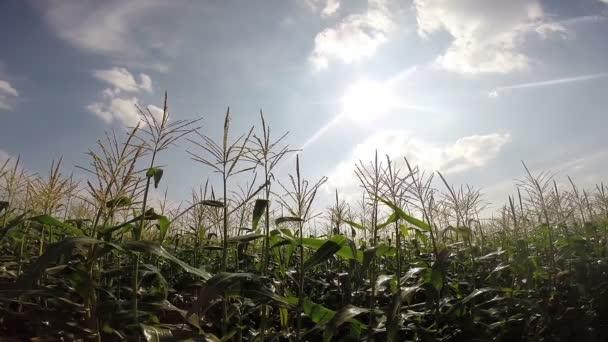 Automata öntözőrendszer több mint a mező kukorica