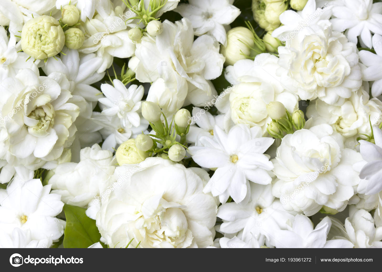 White jasmine flowers fresh flowers stock photo scenery1 193961272 white jasmine flowers fresh flowers stock photo izmirmasajfo