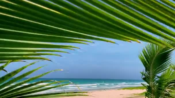A beach with a palm tree. Panoramic view of a tropical sandy beach through palm leaves in the wind. Tropical paradise
