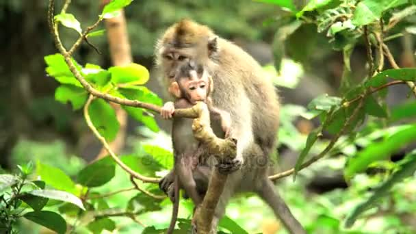 mother Macaque with juvenile