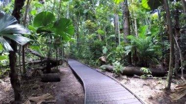 Jungle promenádě prostřednictvím bujné vegetace