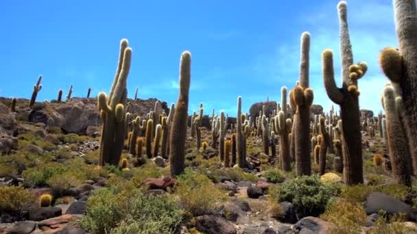 Bolivijský pouštní kaktus