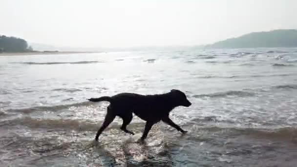Ein großer Hund im Meer. Das Tier tobt im Wasser.