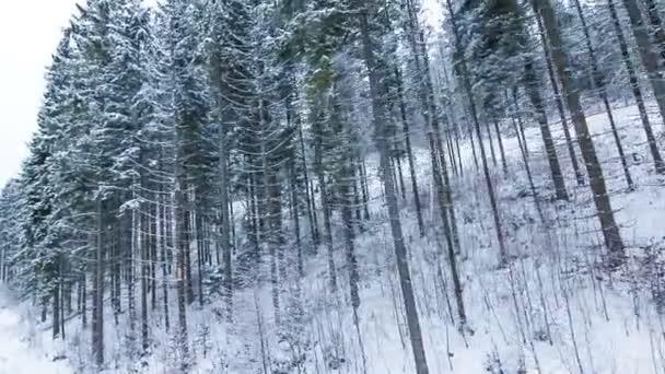 Zimní krajina s vysokými smrky a sněhem v horách