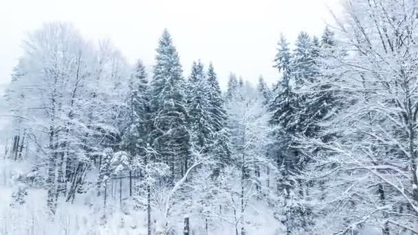 Winterlandschaft mit hohen Fichten und Schnee in den Bergen