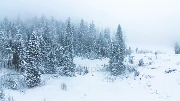 Zimní krajina hory vysoké smrky a sníh