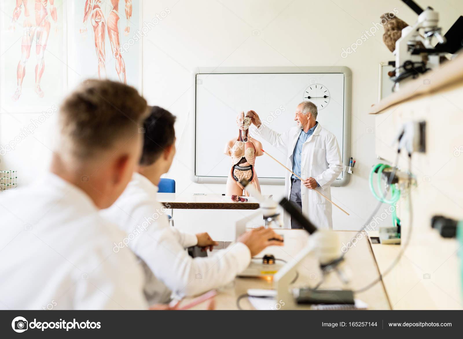 Profesor enseñanza de biología para estudiantes de secundaria — Foto ...
