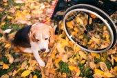 Starší žena na invalidním vozíku se psem v podzimní přírodě.